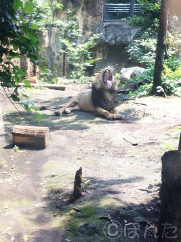 上野動物園2014_5