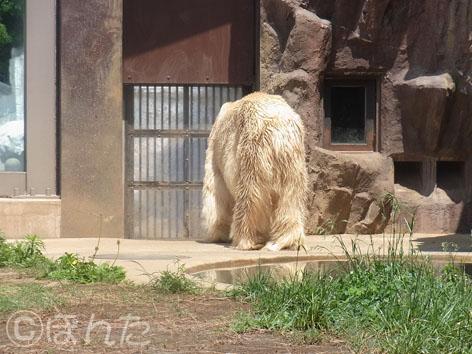 上野動物園2014_10
