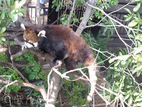 上野動物園2014_11