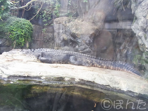 上野動物園2014_15