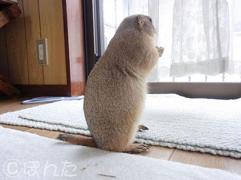 れんげ_初帰省8