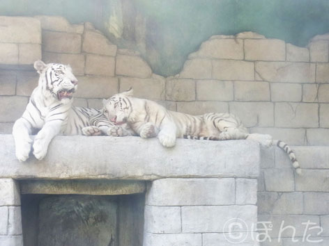 東武動物公園1_10