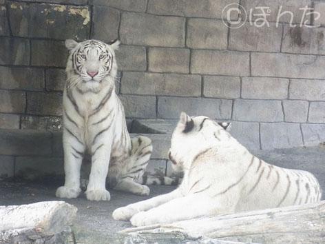 東武動物公園1_9