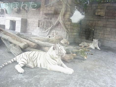 東武動物公園1_7