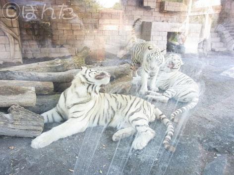東武動物公園1_13