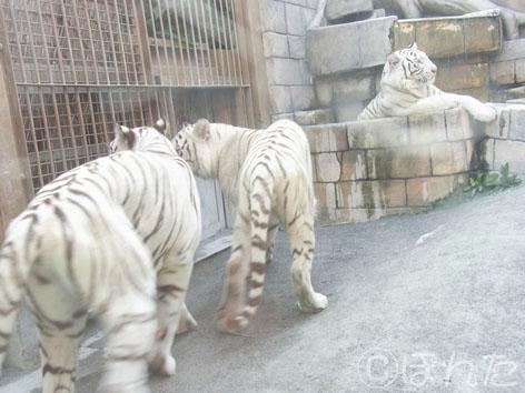 東武動物公園1_12