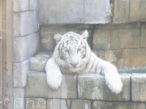 東武動物公園1_11
