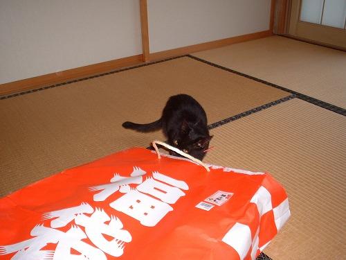 s-ぴーすけ2 (18)