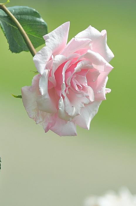DSC_0123_11286_20140521232436829.jpg