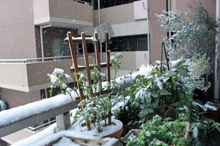 雪の日2_edited-1