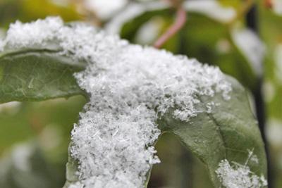 雪の日3_edited-1