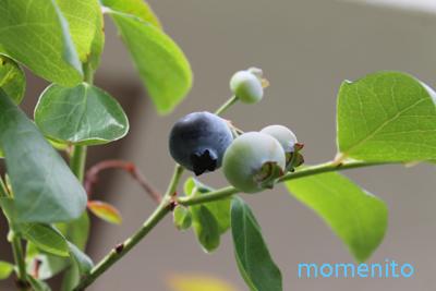 m-20140706-blueberry.jpg