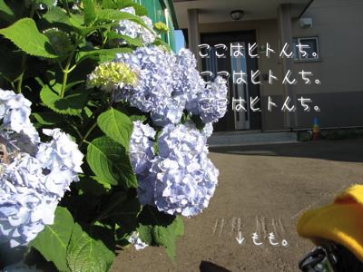 th_IMG_1485.jpg