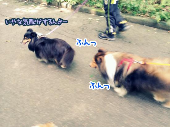 20140825_14.jpg