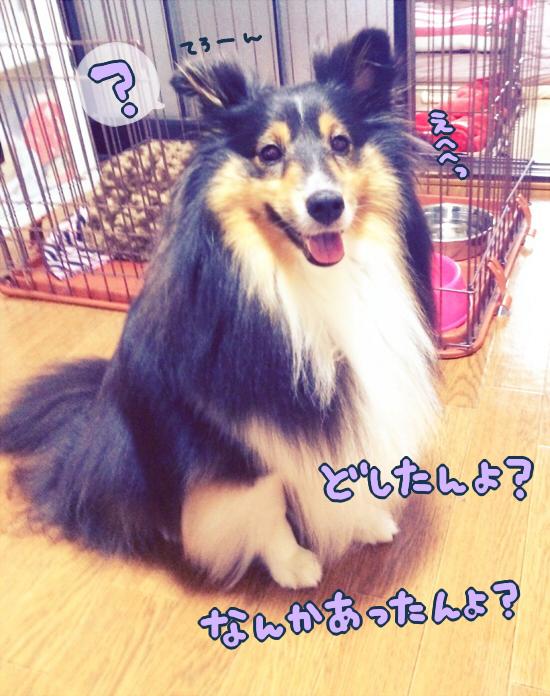 S__2924550.jpg