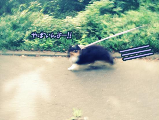 S__4259850.jpg