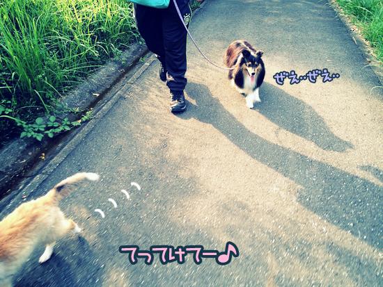 S__4259854.jpg