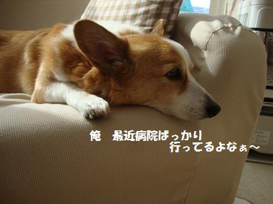 ソファ紋兄