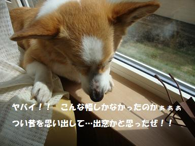 窓縁に紋兄3