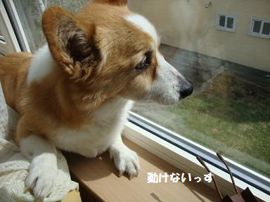 窓縁に紋兄4