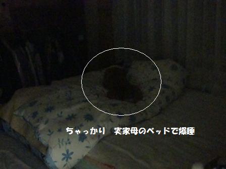 ベッドで寝る紋兄