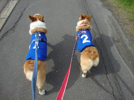 ブルー服でお散歩