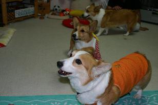 紋&さくら&杏