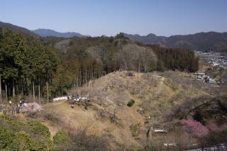 そこはまだ春を待ちわびる丘