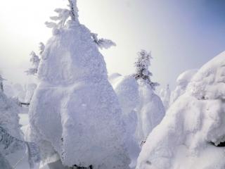 わずかな日が樹氷を照らし