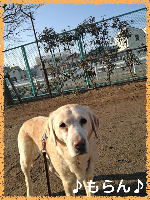 140221 ぽかぽか散歩-4