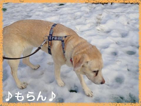 140221 ぽかぽか散歩-5