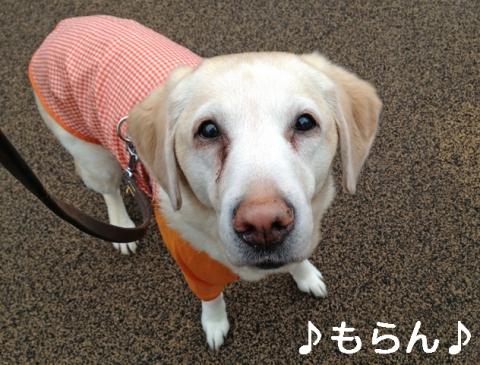 140227 雨上がりのブラブラ散歩-4