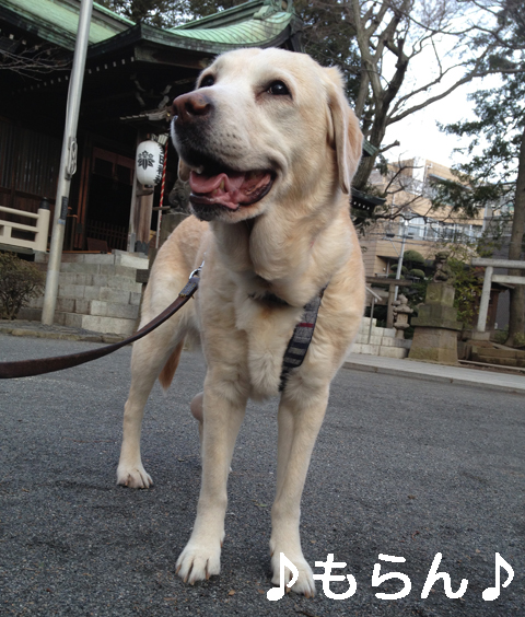 140228 ぽかぽか散歩-1