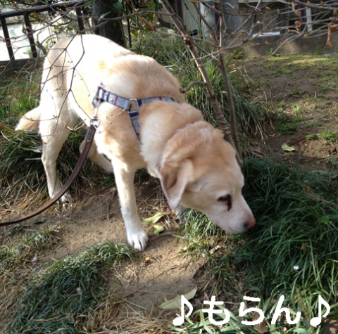 140323 ぽかぽか散歩-2