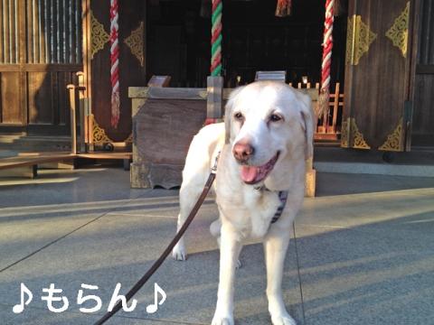140326 曇天さんぽ-2