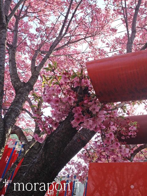 140331 お花見散歩《往路編》-2