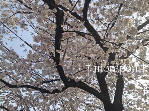 140331 お花見散歩《復路編》-2