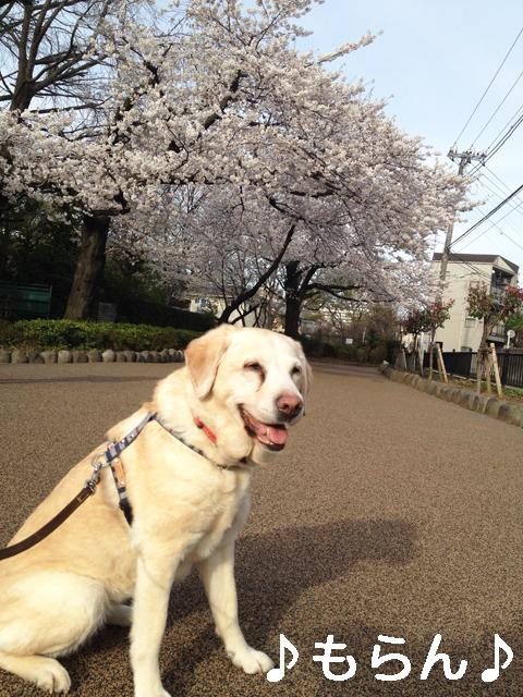 140331 お花見散歩《復路編》-3