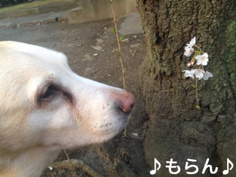 140401 夕焼け散歩-1