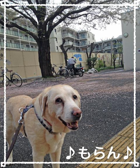 140404 急ぎ足の夕散歩-2