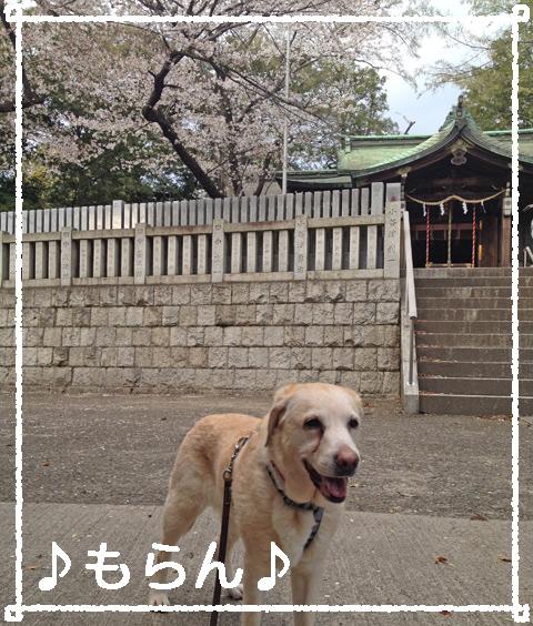 140404 急ぎ足の夕散歩-4