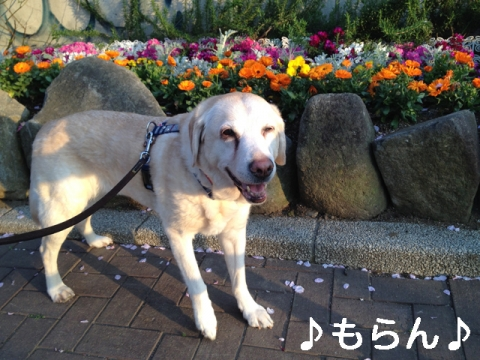 140414 夕焼け散歩-2