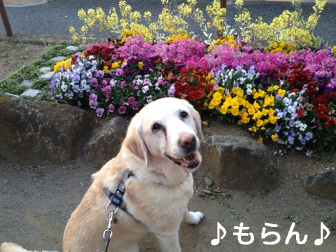 140414 夕焼け散歩-3