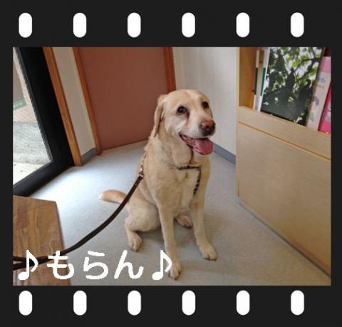140418 狂犬病予防接種-3