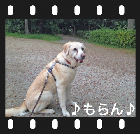140418 ひんやり散歩-3