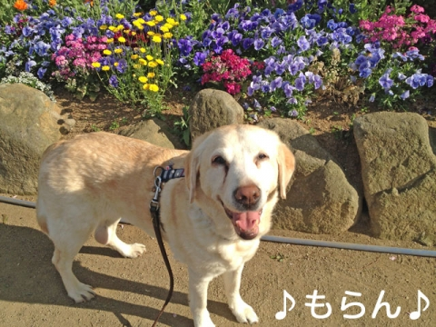 140428 ニコニコ昼散歩-1