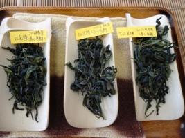 10 期台湾茶文山包種