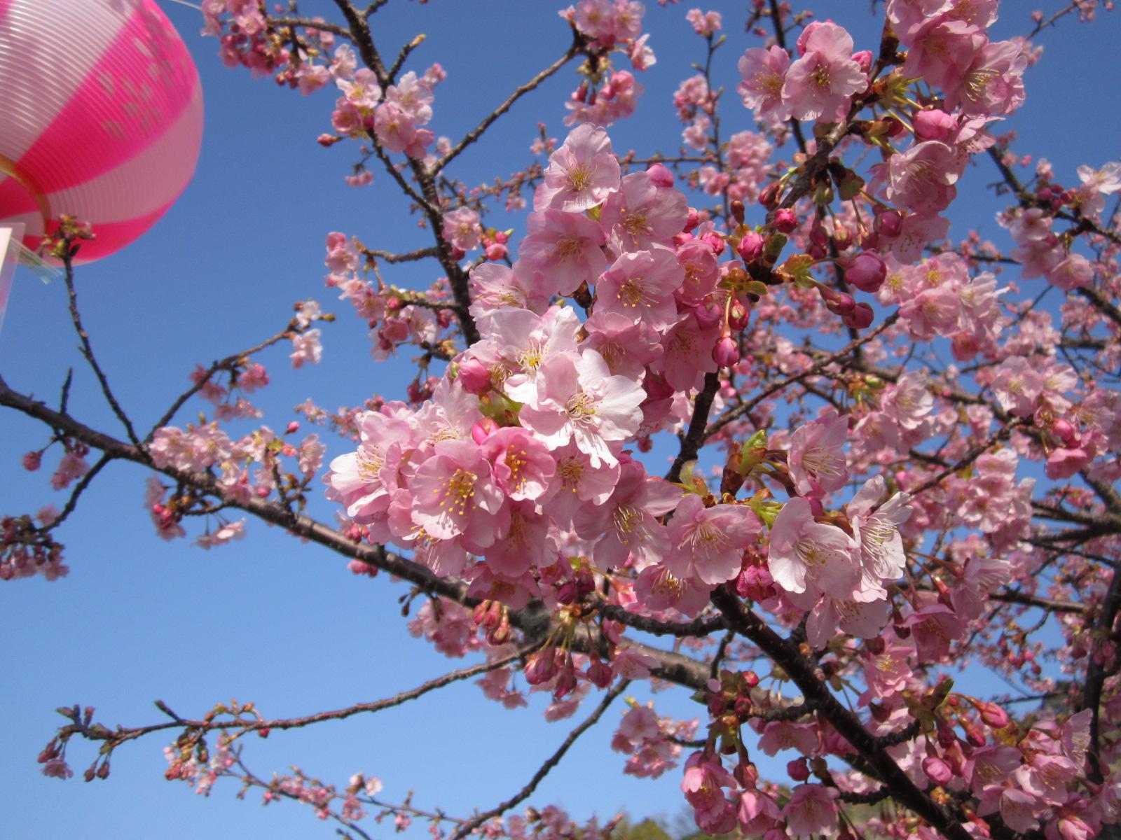6回桜祭り 028