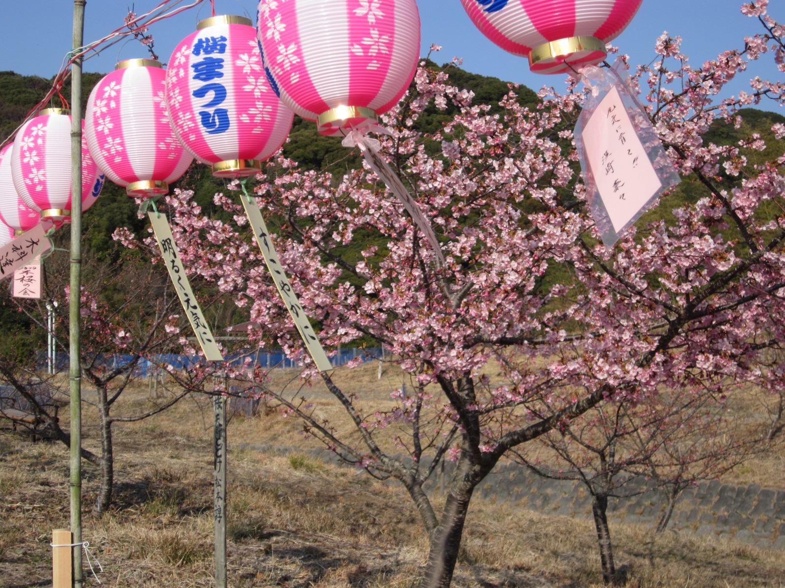 6回桜祭り 031