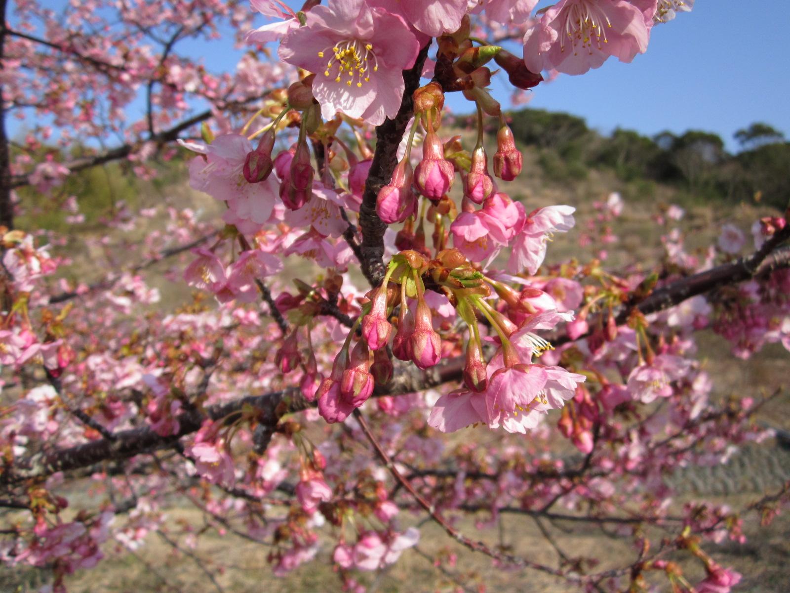 6回桜祭り 034